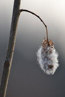 Chmíří, Větívka, Stick, Nature, Autumn, Hairy, Plant