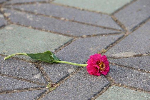 Zinnia On The Floor, Purple, Symbol, Adherence, Flower