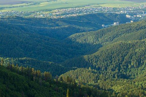 Altai, Russia, Mountain, Mountains, Forest, Trees
