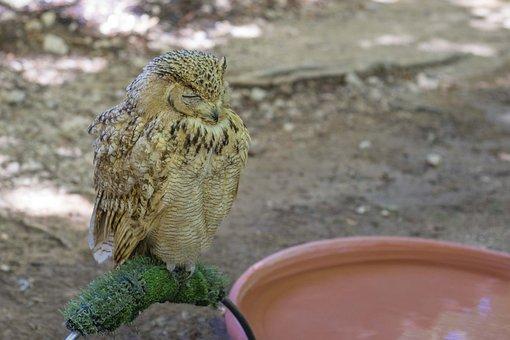 Buho, Animal, Bird Of Prey, Birds, Plumage, Pen
