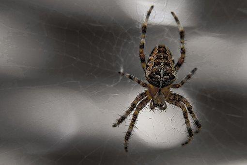 Spider, Arachnid, Insect, Spiderweb, Fear, Phobia