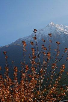 Alpine, Summit, Autumn, Snowy, Leaves, Mountains, Sky