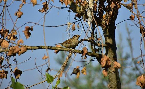 Bird, Sparrow, Pen, Birds, Ave, Peak, Animals, Plumage