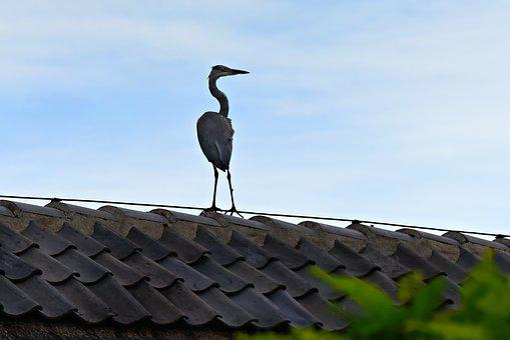Heron, Bird, Wading Bird, Bird Of Prey, Animal