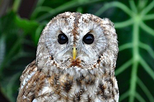 Owl, Birds Of Prey, Bird