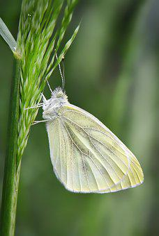 Butterfly, Kelebek, Nature, Doğa, Macro, Wallpaper