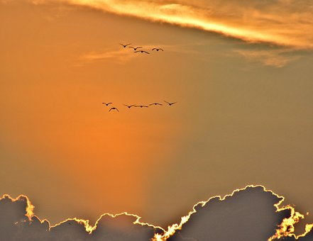 Sunset, Geese, Sky, Beautiful, Flying, Clouds, Sun