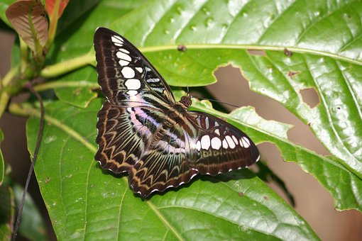 Butterfly, Wings, Flight, Insect, Nature, Tropical