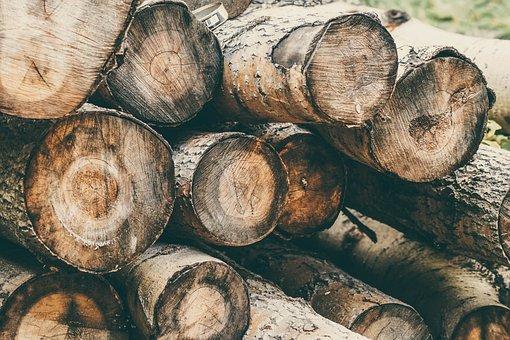 Nature, Logs, Balance Beam, Tree, Horizontal