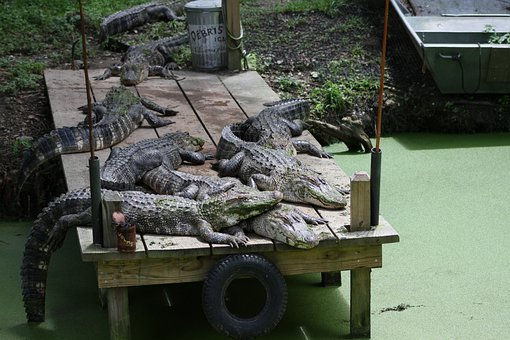 Crocodile, Dock, Lazy, Sleeping, Predator, Mood