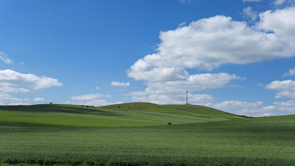 Prairie, Blue Sky, White Cloud, Grassland