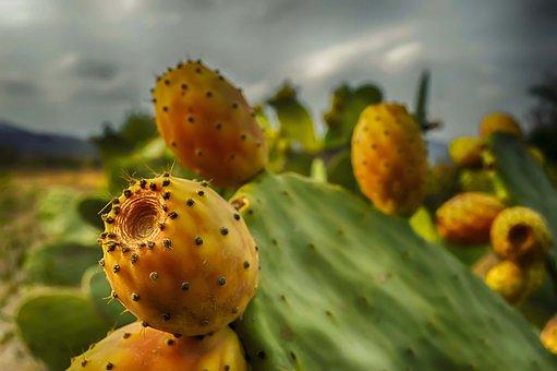 Prickly Pears, Prickly Pear, Prickly Pear Cactus, Fruit