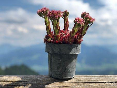 Plant, Landscape, Sky, Flowers, Summer, Spring, Alpine