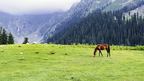 Jahazbanda, Meadows, Upperdir, Kpk, Pakistan, Nikon