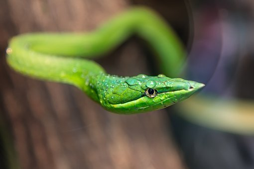 Zoo, Green Snake, Reptile, Predator, Wild, Color