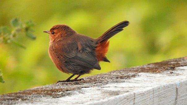 Birds, Sparrow, Nature
