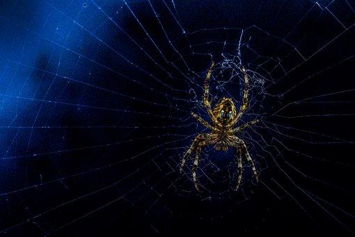Spider, Web, Hairy, Repairing Web, Black Web