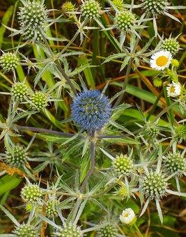 Barb, Bouquet, Flowers, Set, Flora, Spikes, Needles