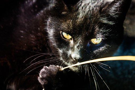 Cat, Black, Eye, Cat's Eyes, Close Up, Cute, Eyes
