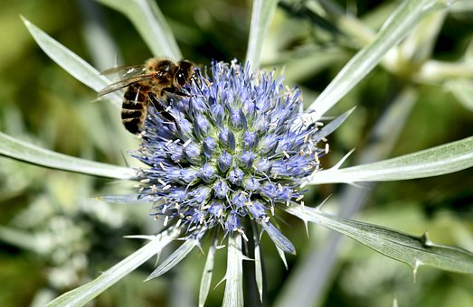 Plant, Flower, Spikes, Insect, Bee