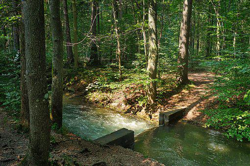 Forest, River, Bach, Water, Tree, Landscape, Nature