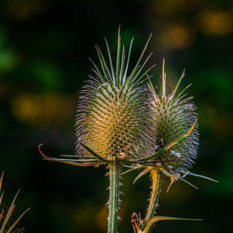 Spike, Plant, Nature, Flower
