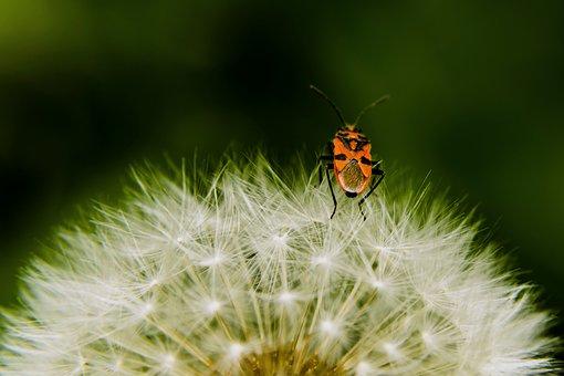 Dandelion, Light, Seeds, Nature, Close, Flower, Summer