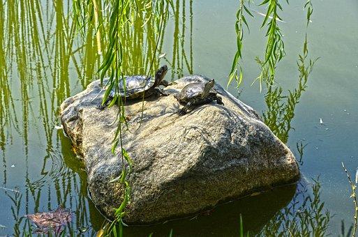 Lake, Turtles, Nature