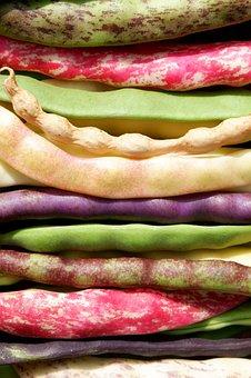 Beans, Colorful, Garden Bean, Garden, Pole Beans