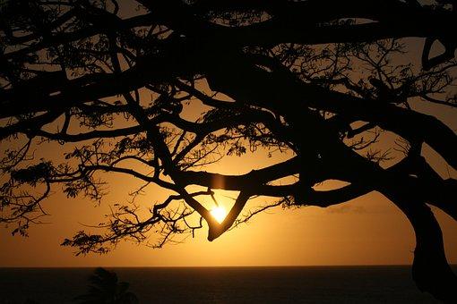 Cradle Of Life, Hawaii, Maui, Tree, Sky, Sea, Sun