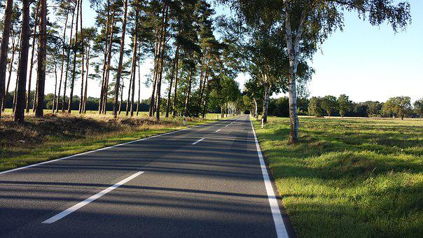 Road, Avenue, Landscape, Nature, Trees, Asphalt, Away