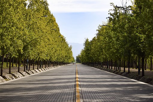 Avenues, Tree, Mountain, Mendoza, Avenue, Away, Trees