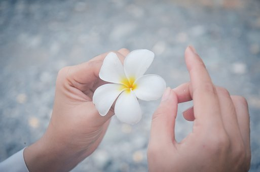 White Flowers, Porcelain Flowers, Background, Hands