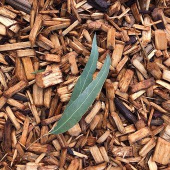 Eucalyptus, Leaves, Leaf, Contrast, Wood Chips, Gum