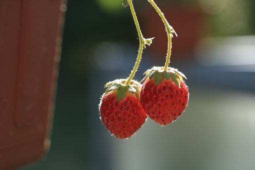 Strawberries, Fruit, Healthy, Sweet, Cultivation, Box