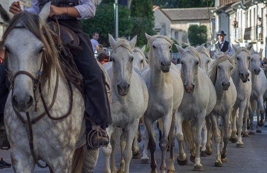 Camargue, Horses, Gardians, Jumper, Mane