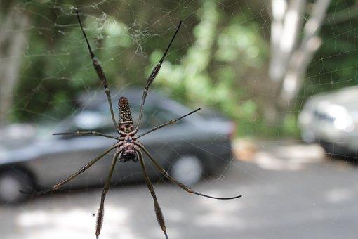Spider, Fear, Nature, Arachnid, Scary, Arachnophobia