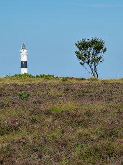Sylt, Heide, Heather, Erika, Island, North Sea