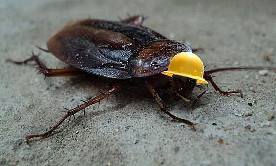 Cockroach, Insect, Pest, Helmet, Vermin, Bug