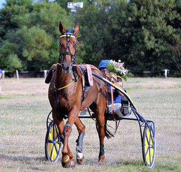 Traber, Racing, Sulky, Jockey, Trot, Equestrian, Horses