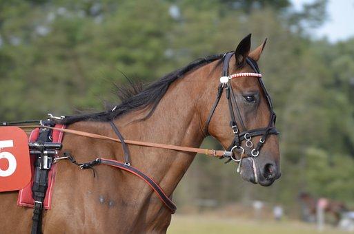 Trotting, Sport, Horse, Horses, Mane, Equestrian