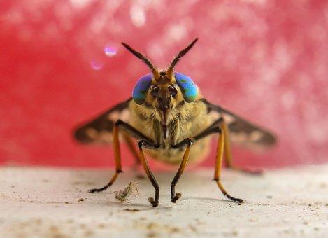 Macro, Macro Photography, Insect, Nature