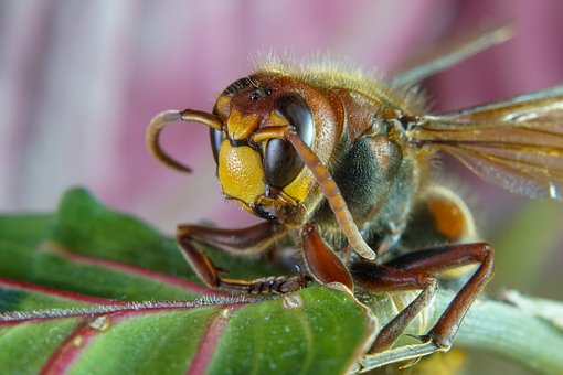 Macro Photo, Macro, Macro Photography, Insect, Nature