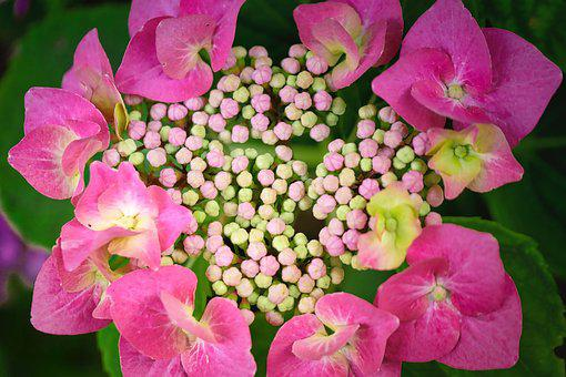 Blossom, Bloom, Flower, Nature, Plant, Bloom, Summer