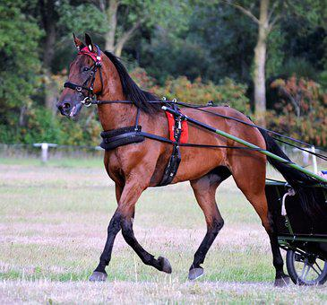 Traber, Racing, Rennsulky, Mare, Equestrian, Horses