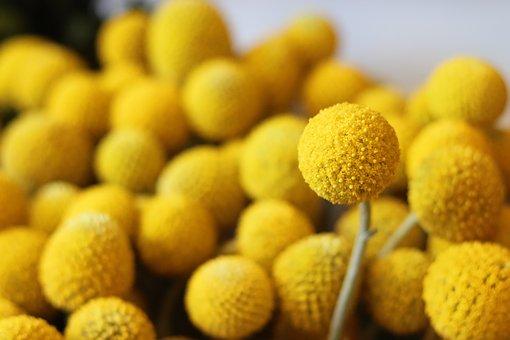 A Roundish Flower, Round Flower, Yellow, Flowers