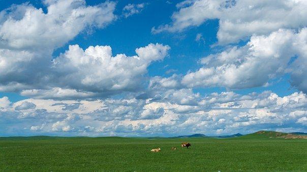 Cow, Sheep, Prairie, Sky, White Cloud, The Vast