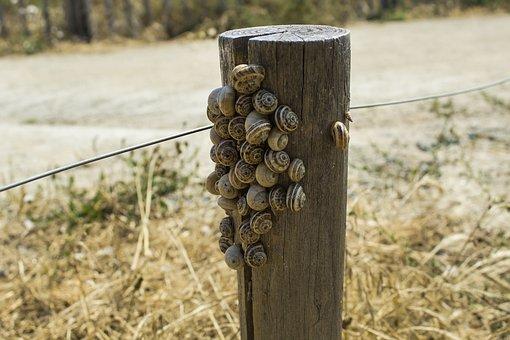 Snails, Trail, Nature, Mollusk, Slowly