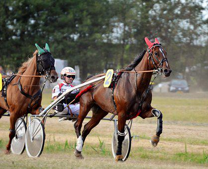 Trotting, Sulky, Equestrian, Racing, Traber, Jockey