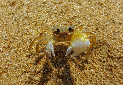 Crab, Vietnam, Outdoor, Water